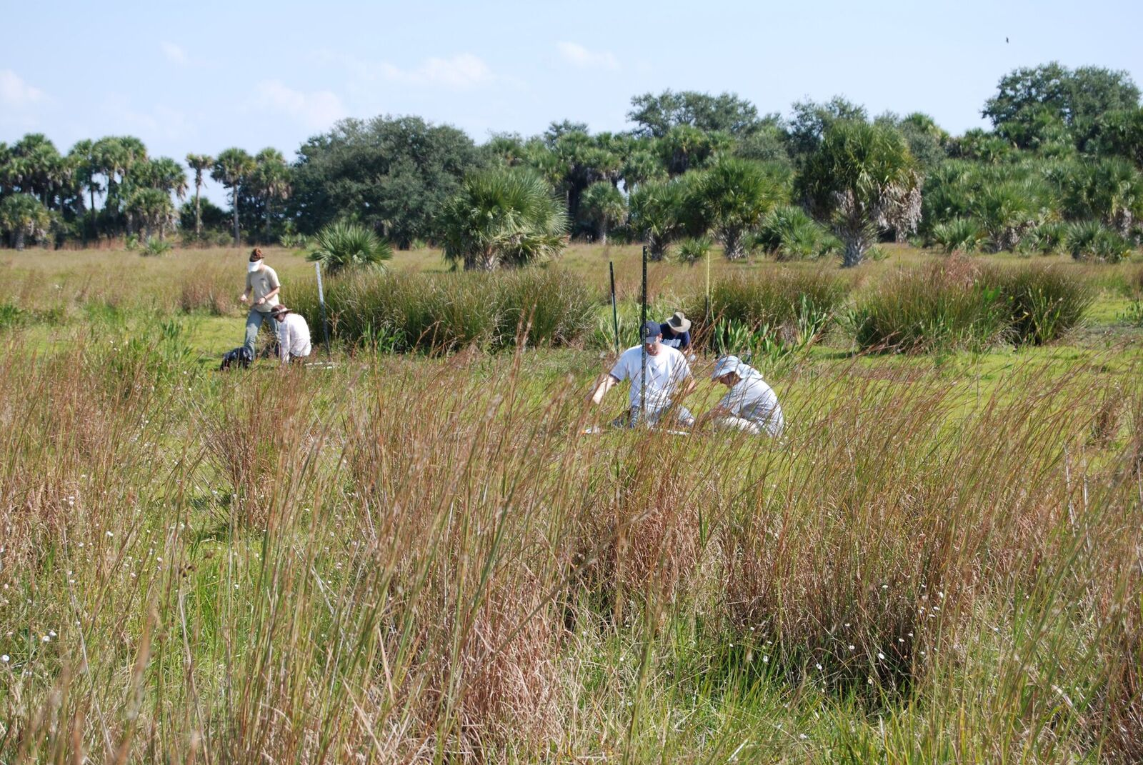 Field Researchers collecting biomass in a wetland