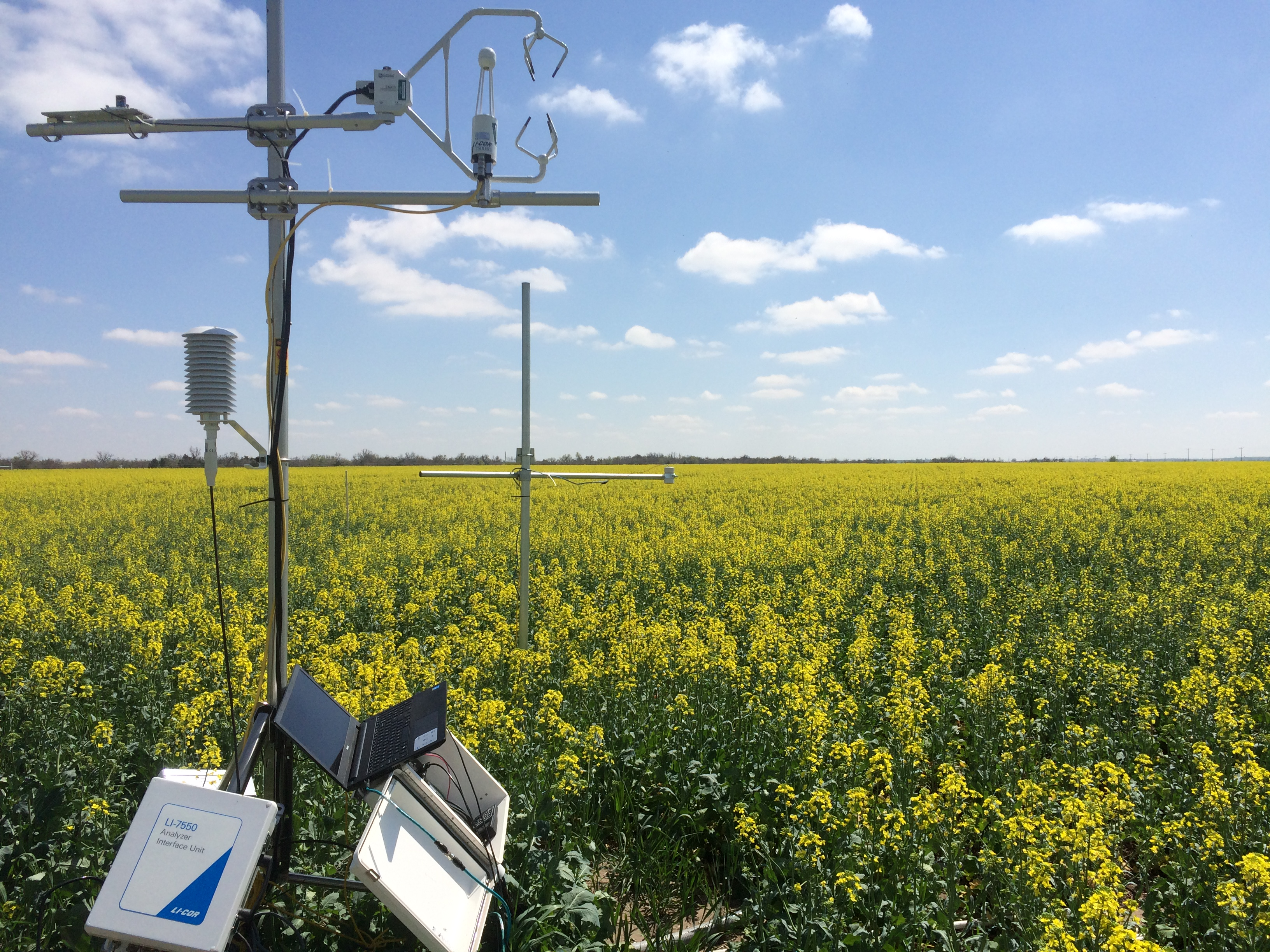 SP canola in common experiment