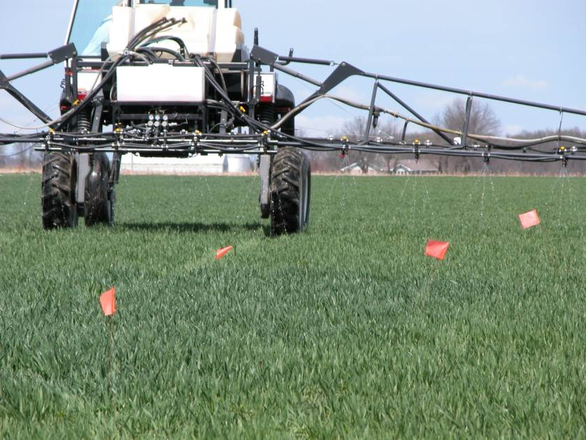 Sensor-based variable-rate N fertilization of wheat